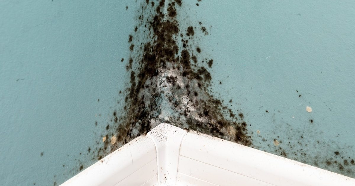 picture of wall with mold